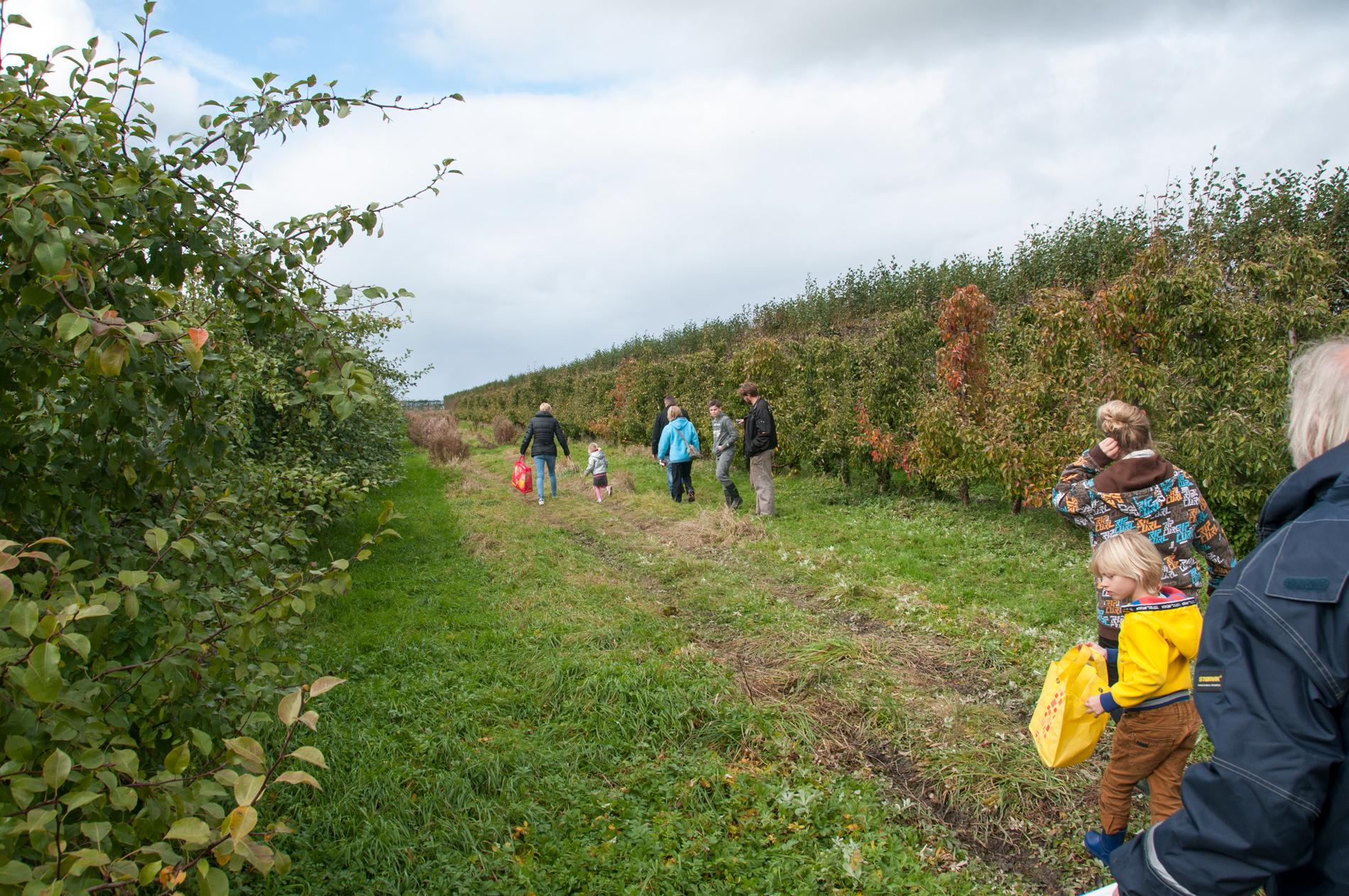 peren-plukken-bij-de-boer-zelfplukdagen